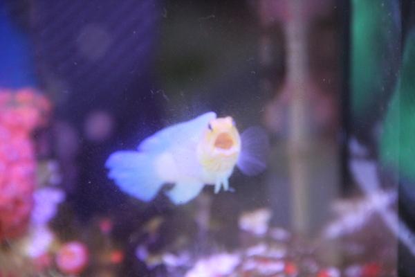 うおっち&ももの海水魚日記-わ