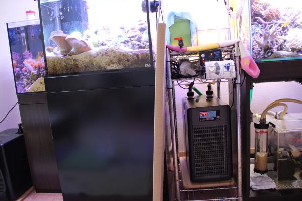 うおっち&ももの海水魚日記-WB-2