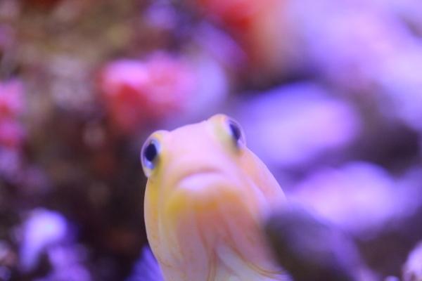 うおっち&ももの海水魚日記-YJ
