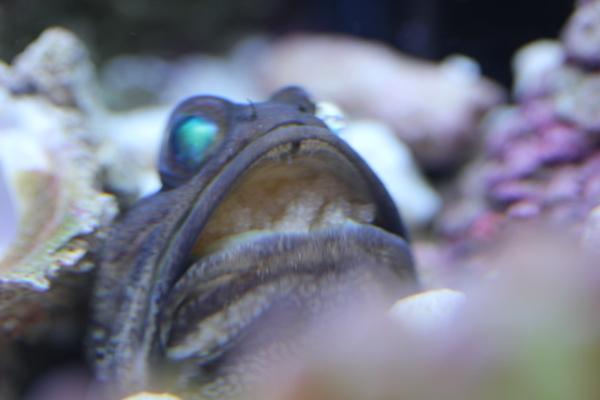 うおっち&ももの海水魚日記-BJ3