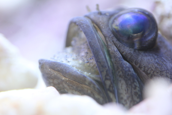 うおっち&ももの海水魚日記-バン1