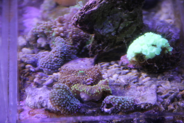 うおっち&ももの海水魚日記-AB8