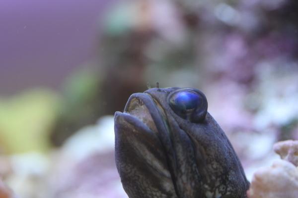 うおっち&ももの海水魚日記-バン2