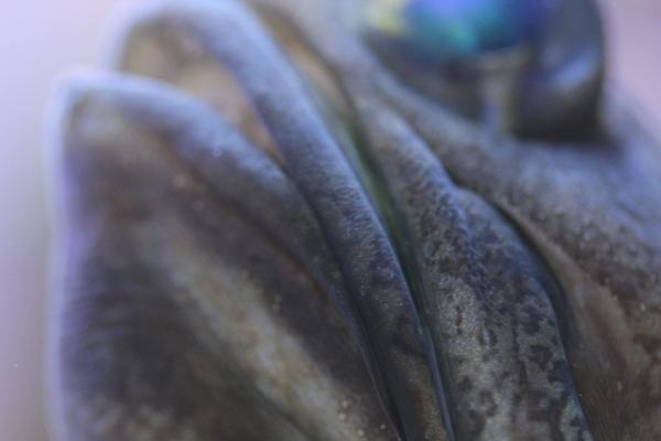 うおっち&ももの海水魚日記-バン4