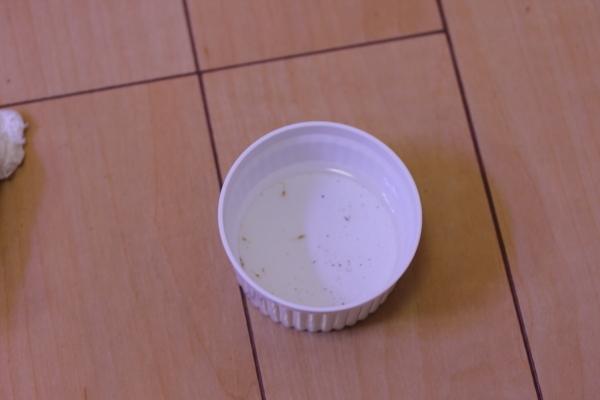 うおっち&ももの海水魚日記-虫1
