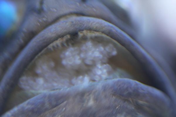 うおっち&ももの海水魚日記-バン8