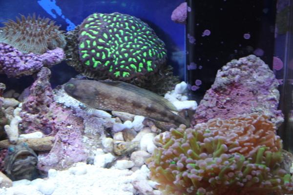うおっち&ももの海水魚日記-バン5