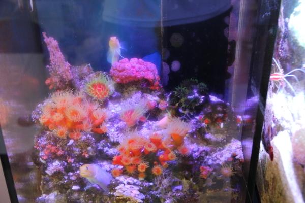 うおっち&ももの海水魚日記-ジョー301