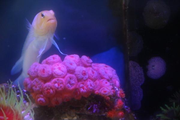 うおっち&ももの海水魚日記-ジョー302