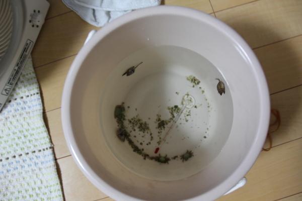 うおっち&ももの海水魚日記-カニ1
