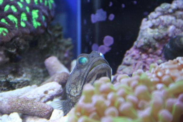 うおっち&ももの海水魚日記-45-3