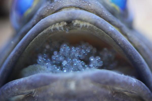 うおっち&ももの海水魚日記-45-5