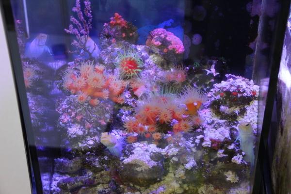 うおっち&ももの海水魚日記-30-1
