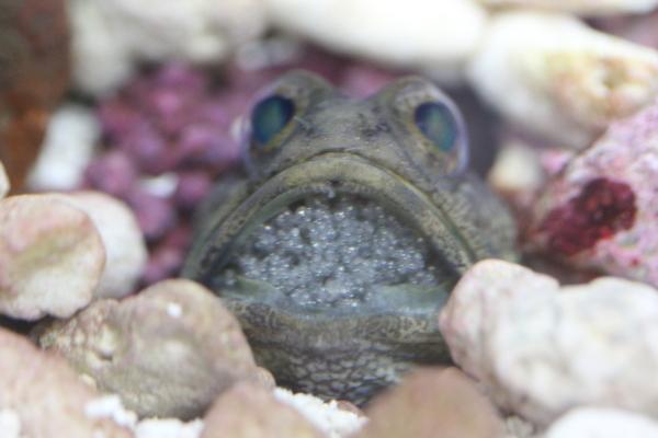 うおっち&ももの海水魚日記-ばん5