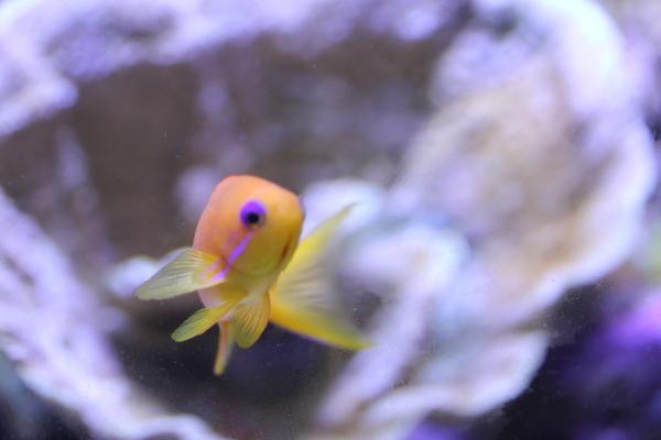 うおっち&ももの海水魚日記-90-4