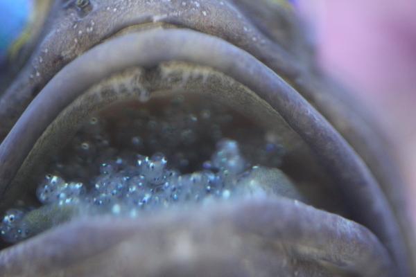 うおっち&ももの海水魚日記-ばん4