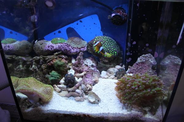うおっち&ももの海水魚日記-ban8
