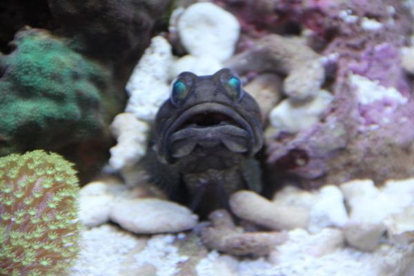 うおっち&ももの海水魚日記-1157-2