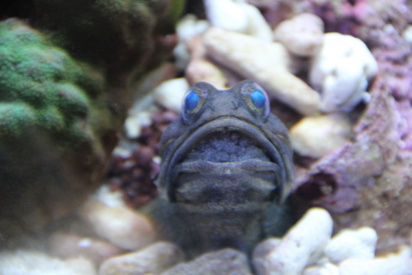 うおっち&ももの海水魚日記-ban