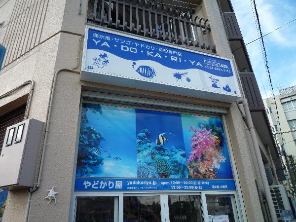 うおっち&ももの海水魚日記-Y