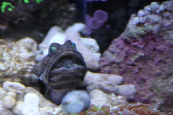 うおっち&ももの海水魚日記-ban-2