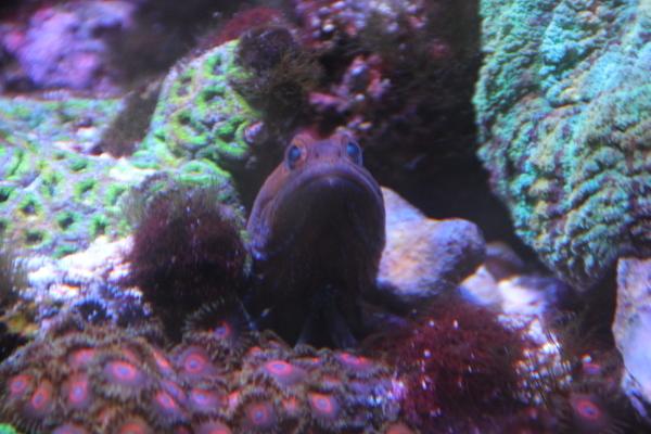 うおっち&ももの海水魚日記-osean