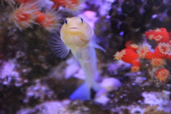 うおっち&ももの海水魚日記-30-5