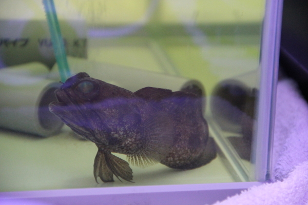 うおっち&ももの海水魚日記-バン