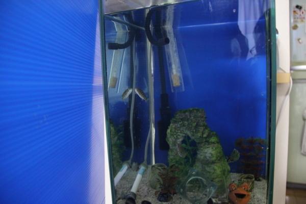 うおっち&ももの海水魚日記-gp-3