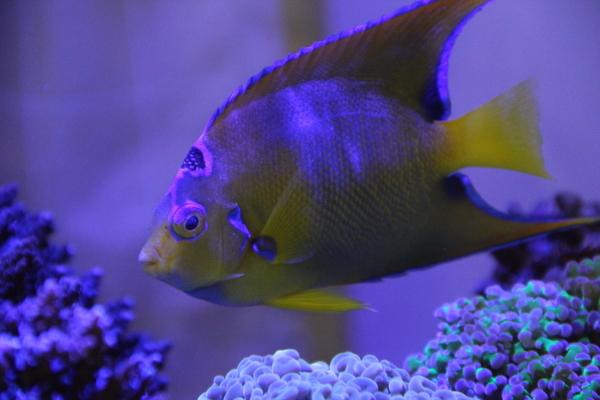 うおっち&ももの海水魚日記-女王