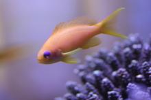 うおっち&ももの海水魚日記-90-7