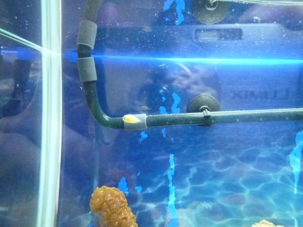 うおっち&ももの海水魚日記-'08-07