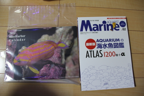 うおっち&ももの海水魚日記-MA1