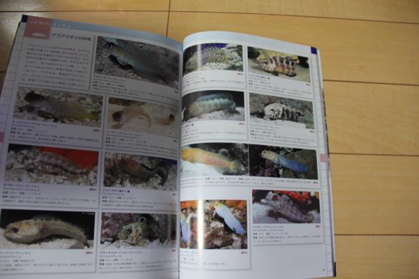うおっち&ももの海水魚日記-MA2