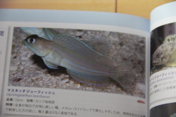 うおっち&ももの海水魚日記-MA3