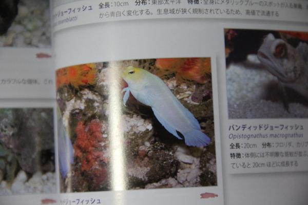 うおっち&ももの海水魚日記-MA4
