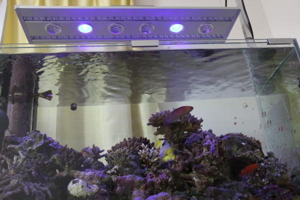 うおっち&ももの海水魚日記-KR93SP-30