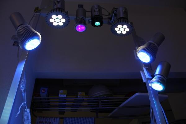 うおっち&ももの海水魚日記-LED-1