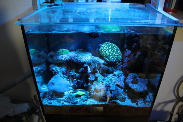 うおっち&ももの海水魚日記-LED-4
