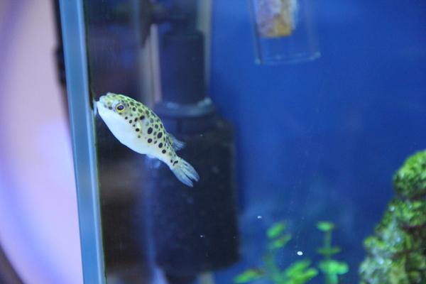 うおっち&ももの海水魚日記-ジロウ2