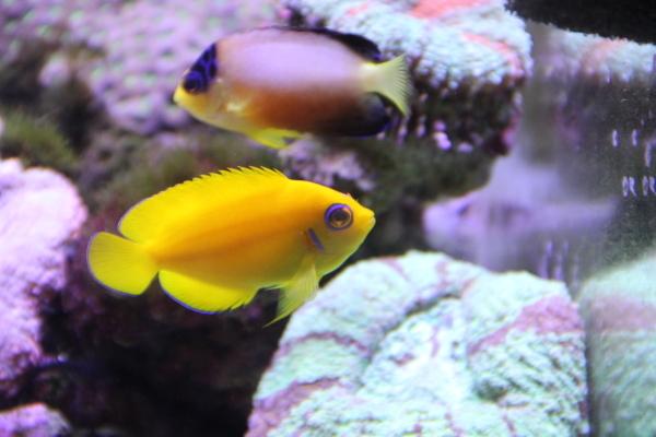 うおっち&ももの海水魚日記-60-4