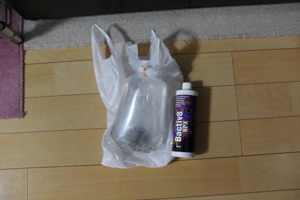 うおっち&ももの海水魚日記-BH-1