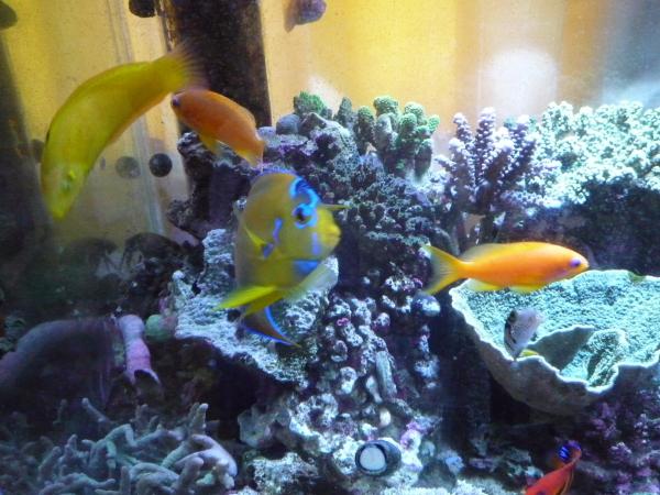 うおっち&ももの海水魚日記-2011-1-24