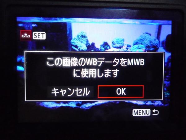 うおっち&ももの海水魚日記-カメラ4