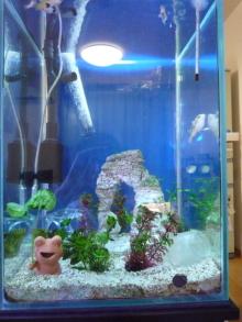 うおっち&ももの海水魚日記-2010-8-20(1)