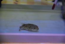 うおっち&ももの海水魚日記-2012-2-7(3)