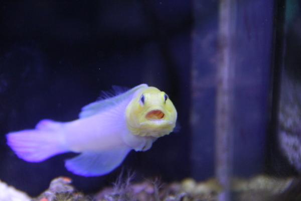 うおっち&ももの海水魚日記-ジョー2