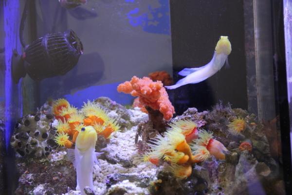 うおっち&ももの海水魚日記-オレンジ2