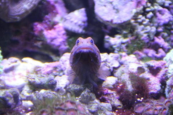 うおっち&ももの海水魚日記-60-2
