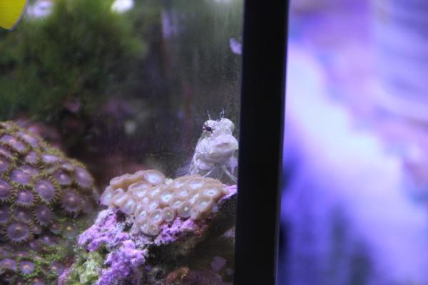 うおっち&ももの海水魚日記-ヤエヤマ
